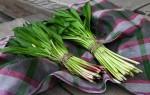 Посадка черемши в открытый грунт: правила ухода, сорта, сбор урожая