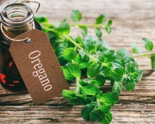 Оригинальное применение масла орегано (душицы) и потрясающие свойства состава