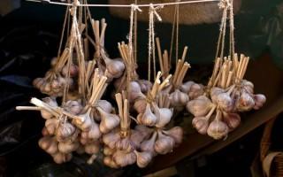 Как сохранить чеснок до весны свежим и ароматным — сроки хранения
