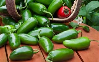 Что такое острый перец халапеньо: польза и вред, применение, выращивание