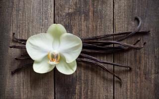 Что такое ваниль и как она растет в природе: польза, применение, выбор и хранение