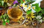 Какие травы спасают от кашля — работающие рекомендации и рецепты