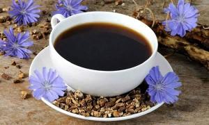 Польза и вред цикория для здоровья: сколько можно в день и как применять