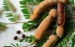 Что такое тамаринд и как индийский финик есть правильно — польза и вред