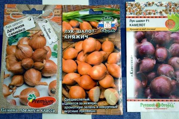 Лук-шалот семена разные