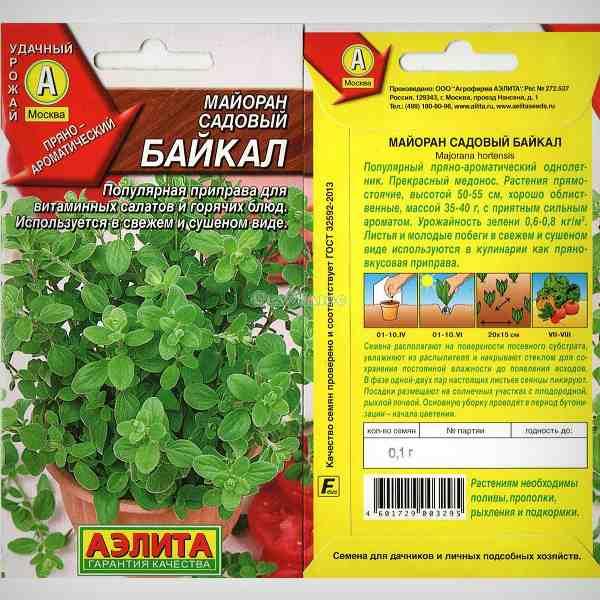 Майоран садовый вид Байкал