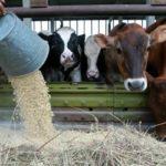 Прикорм для скота