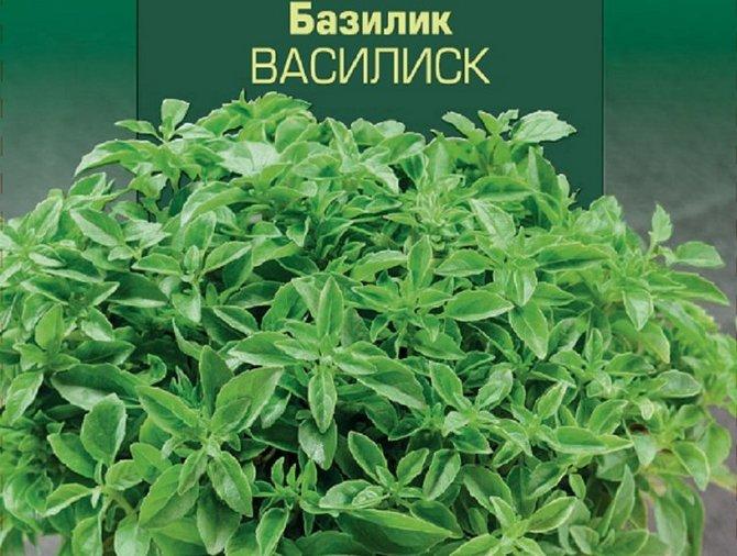 Базилик Василиск