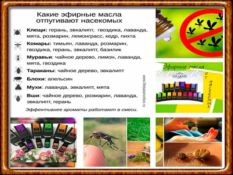 Какие масла отпугивают насекомых