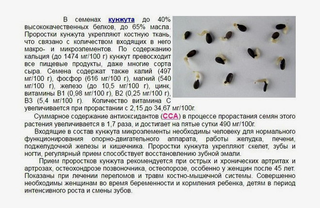 Польза проростков кунжута