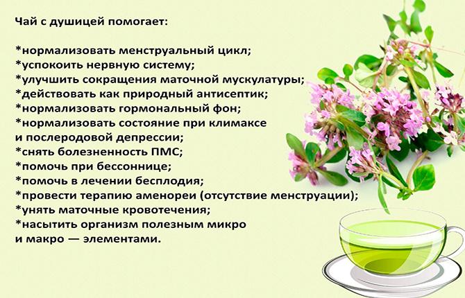 Чем помогает чай с душицей