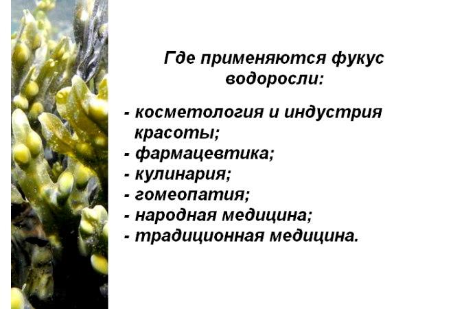 фукус 3